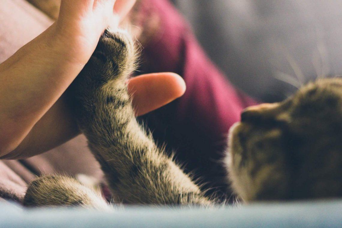 Acariciar gatos: ¿un negocio de futuro?